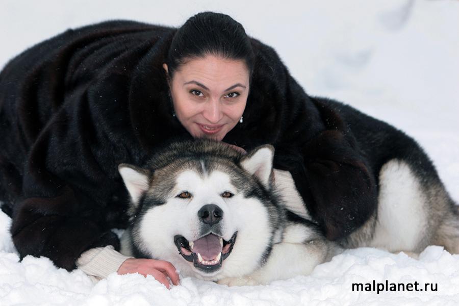 Питомник аляскинских маламутов Mal PLanet